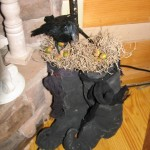 birds nest in witch boots