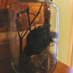 crow in jar uplighted