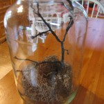 put twig in jar 150x150 Crow in a jar for Halloween decorating.