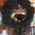 crow wreath