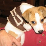 sawyer 150x150 Make a soft and cuddly harness for your dog.
