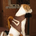sawyer in his harness1 150x150 Make a soft and cuddly harness for your dog.